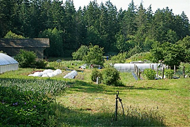 Morning Star Farm, Orcas Island